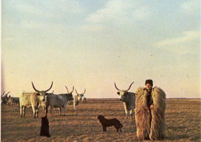 Hegedűs László gyűjtése 77